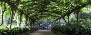 Comprar jardin botanico malaga